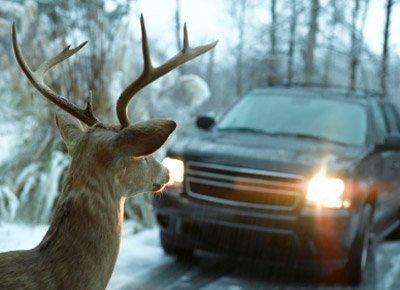 car approaching deer in the road
