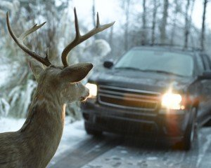 When driving, watch for deer or wildlife crossing signs, which are placed in areas where animals are known to congregate.