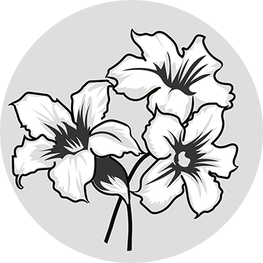 Desert Rose - Peter Thomas Roth Skin Care Ingredient Glossary