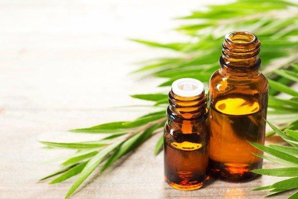 Tea Tree Oil - Peter Thomas Roth Skin Care Ingredient Glossary