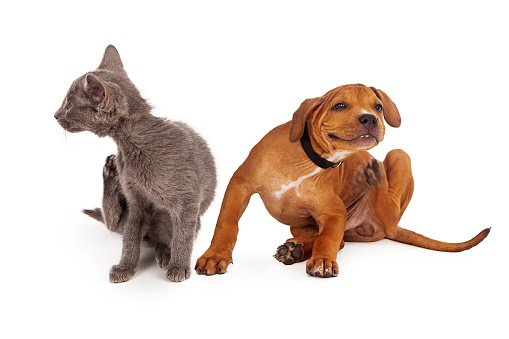 Emu Oil helps relieve dry itchy skin for dogs and cats.
