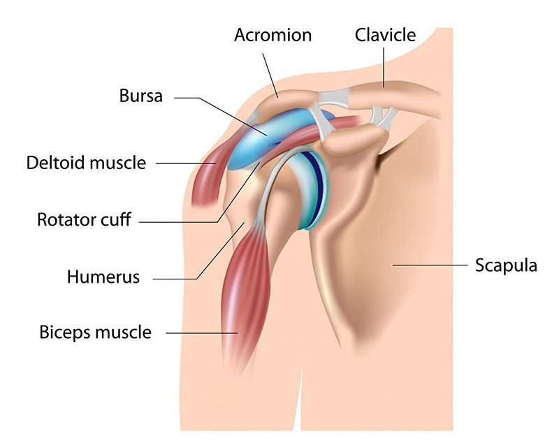 Shoulder strains and dislocation can be very painful