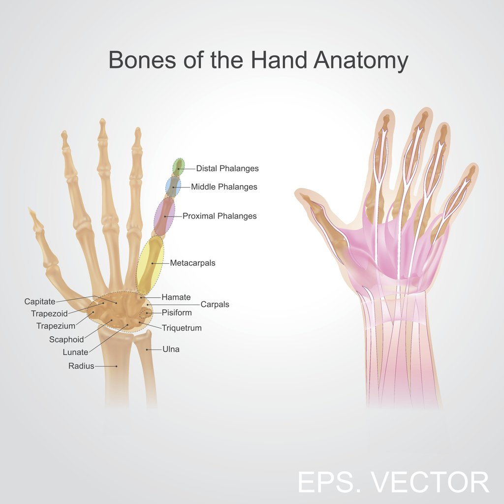 The wrist can have pain from several causes