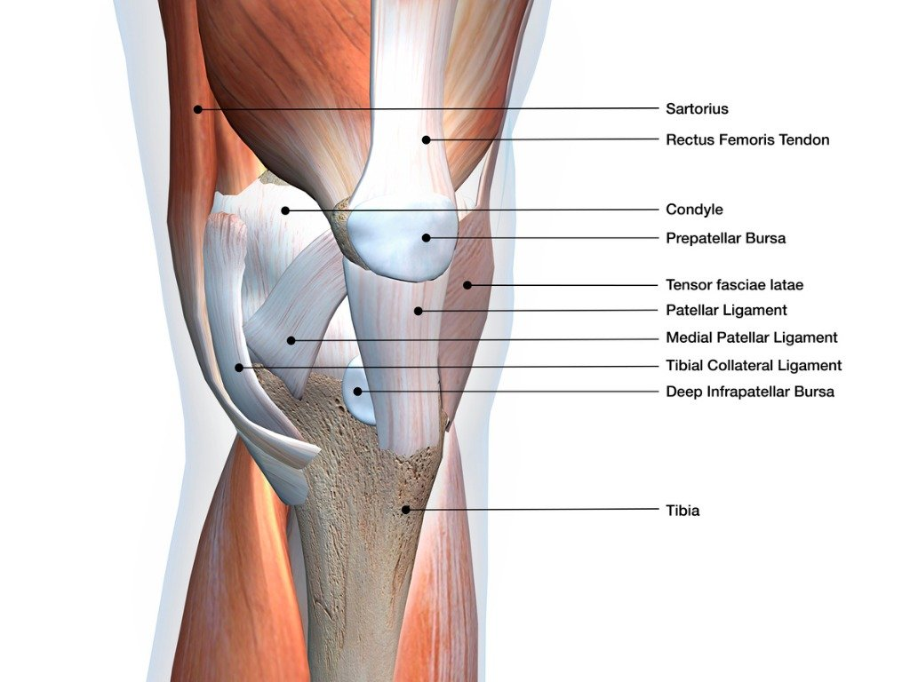 Patellofemoral pain in the most common injury with sports
