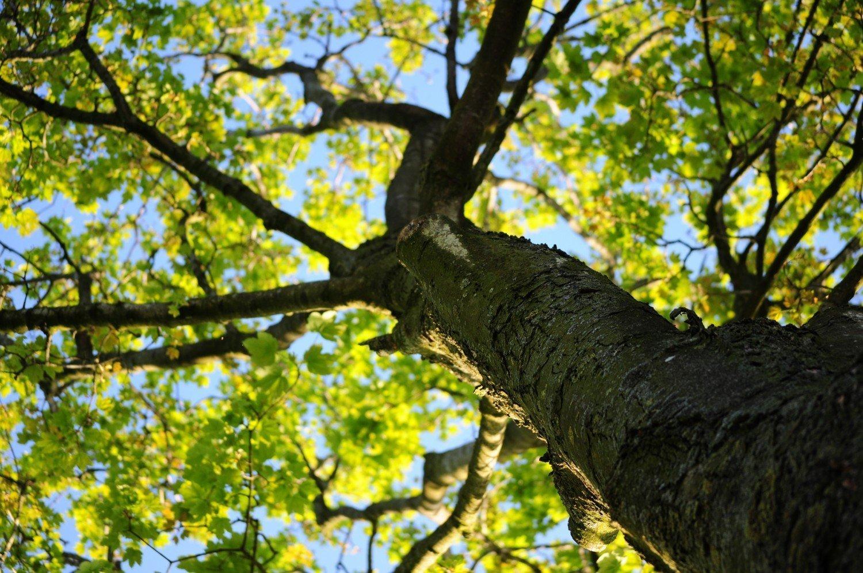 climbing-tree.jpg